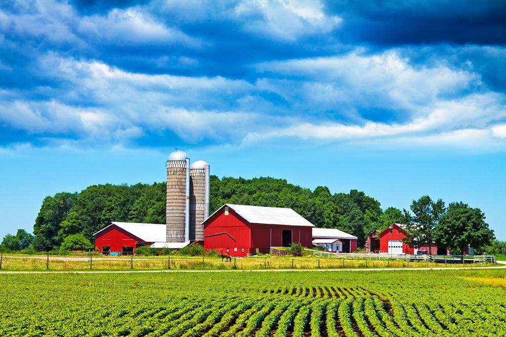American Farm.